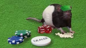 Gambling Rats Image
