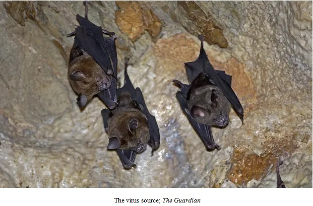 Bats Hanging From Cave Ceiling Image