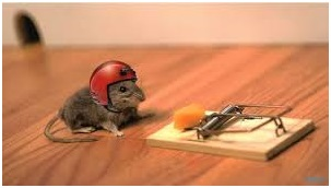 A Mouse with a helmut on attempting to rob a trap