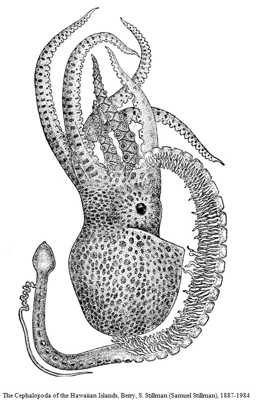 The Cephalopoda of the Hawaiian Islands Image